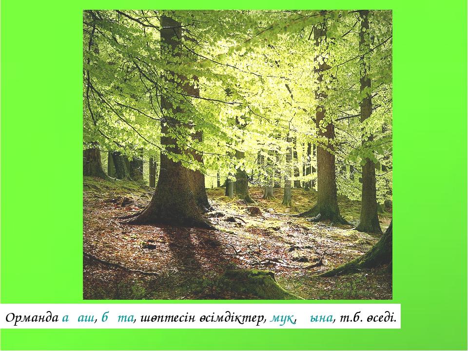 Орманда ағаш, бұта, шөптесін өсімдіктер, мүк, қына, т.б. өседі.