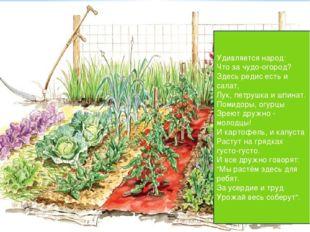 Удивляется народ: Что за чудо-огород? Здесь редис есть и салат, Лук, петрушка