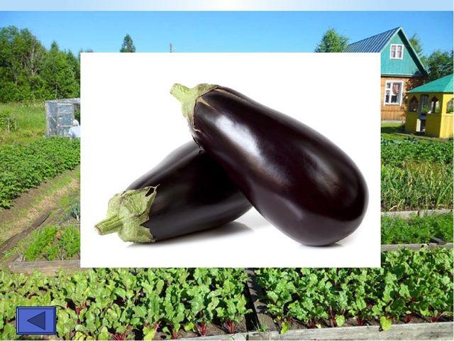 Хоть чернил он не видал, Фиолетовым вдруг стал, Любят овощ Ваня, Жан... Так...