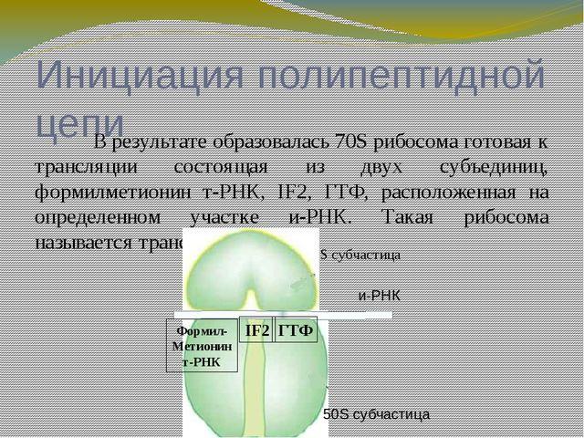 (А) (П) Малая субчастица Большая субчастица и-РНК