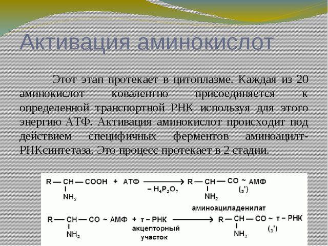 Инициация полипептидной цепи Имеются экспериментальные доказательства, что...