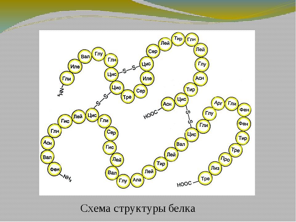 Понятие о генетическом коде Природа триплетного кода была расшифрована в 19...
