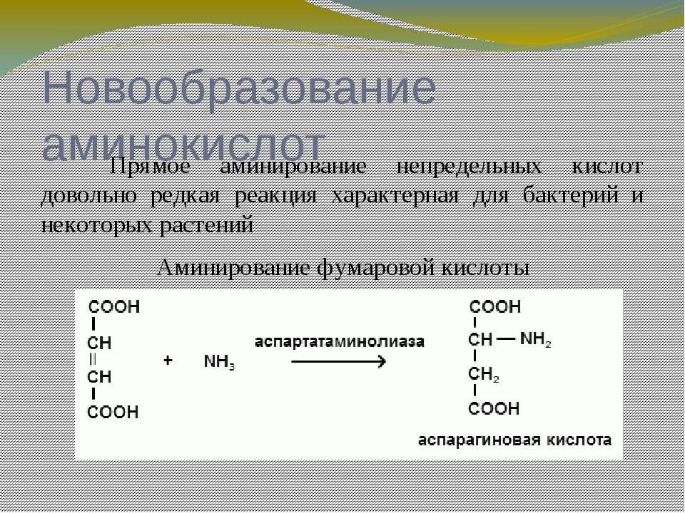 Новообразование аминокислот Фумаровая кислота в организме образуется в резу...