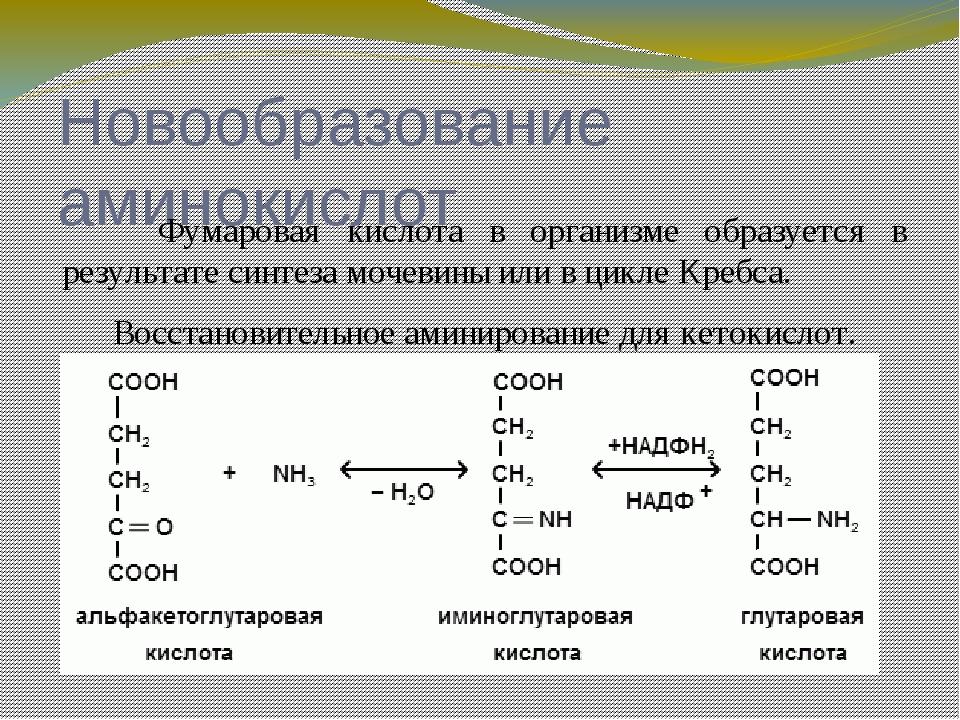 Новообразование аминокислот Другой кислотой подвергающийся активному восста...