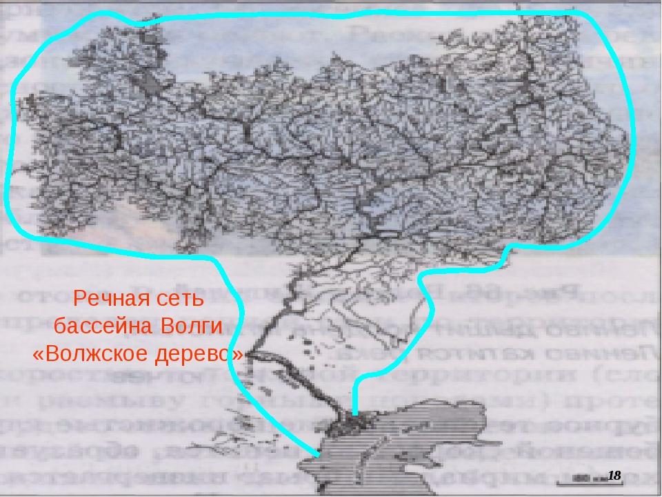 Речная сеть бассейна Волги «Волжское дерево» *