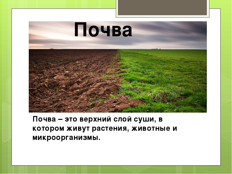 Почва – это верхний слой суши, в котором живут растения, животные и микроорга...
