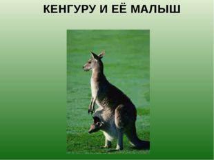 КЕНГУРУ И ЕЁ МАЛЫШ Малыш-кенгуренок появляется на свет величиной с крупную фа