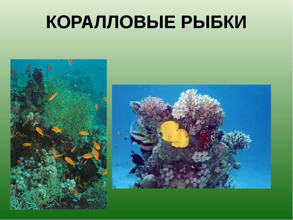 КОРАЛЛОВЫЕ РЫБКИ Кораллы очень яркие и красочные, и на этом фоне серые рыбы о...