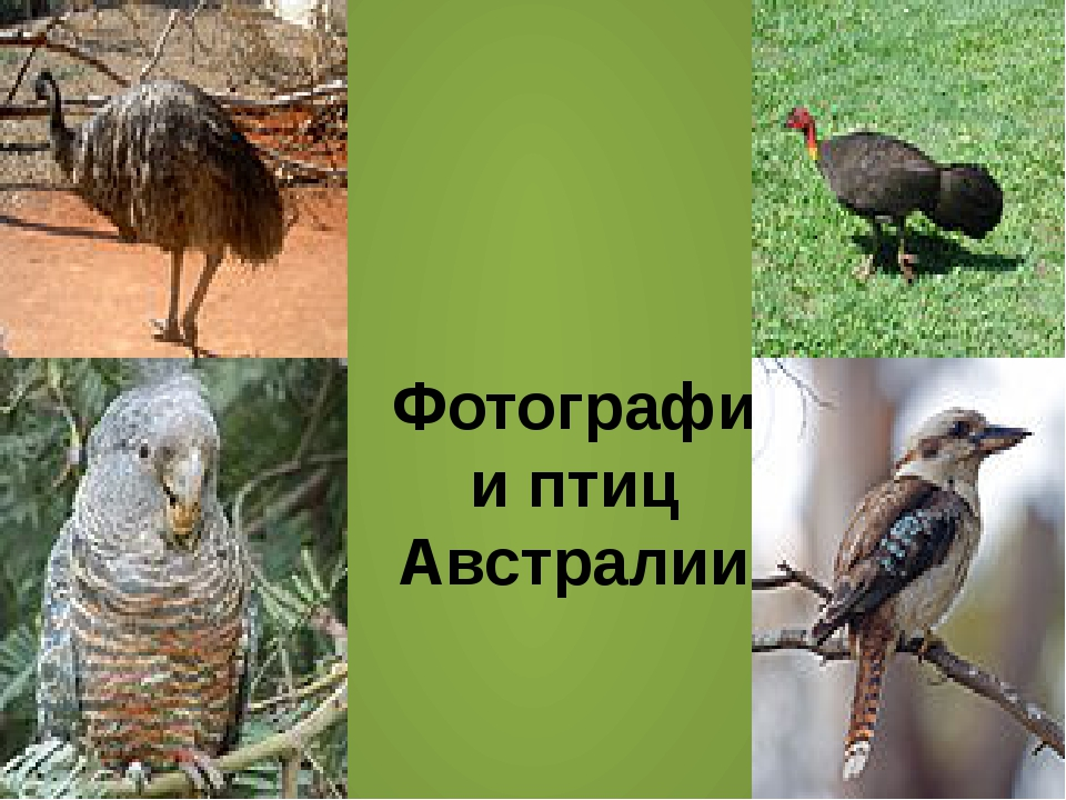 Фотографии птиц Австралии