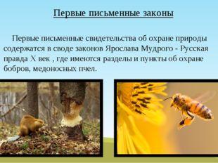 Первые письменные законы Первые письменные свидетельства об охране природы со