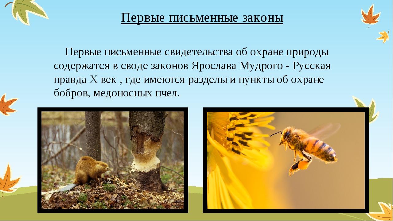 Первые письменные законы Первые письменные свидетельства об охране природы со...