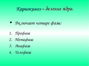 Кариокинез – деление ядра. Включает четыре фазы: Профаза Метафаза Анафаза Тел