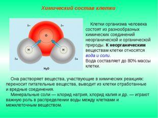 Она растворяет вещества, участвующие в химических реакциях: переносит питате