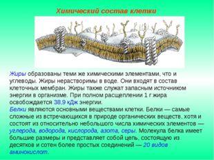 Жиры образованы теми же химическими элементами, что и углеводы. Жиры нераство