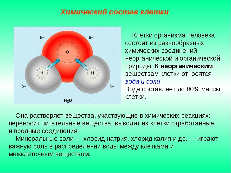 Она растворяет вещества, участвующие в химических реакциях: переносит питате...
