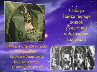 Собака Лайка первое живое существо, побывавшее в космосе Белка и Стрелка стал