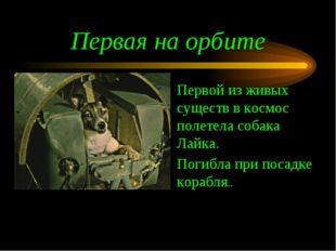 Первая на орбите Первой из живых существ в космос полетела собака Лайка. Поги