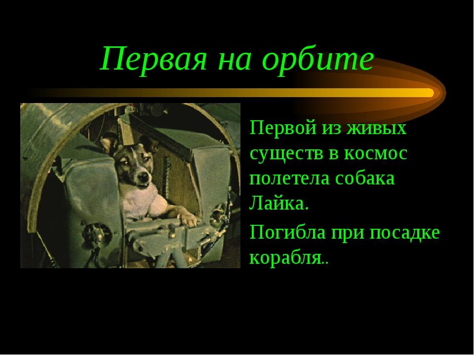 Первая на орбите Первой из живых существ в космос полетела собака Лайка. Поги...
