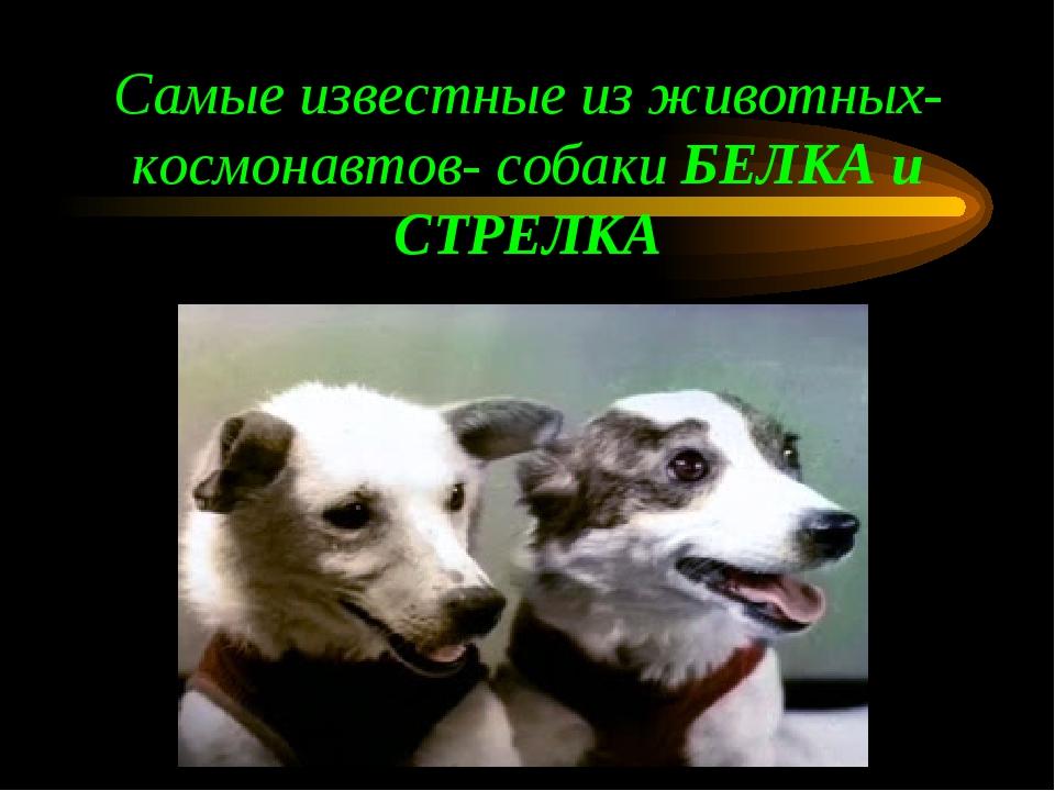 Самые известные из животных-космонавтов- собаки БЕЛКА и СТРЕЛКА