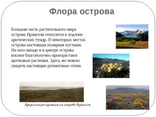 Флора острова Большая часть растительного мира острова Врангеля относится к п