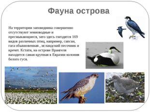 Фауна острова На территории заповедника совершенно отсутствуют земноводные и