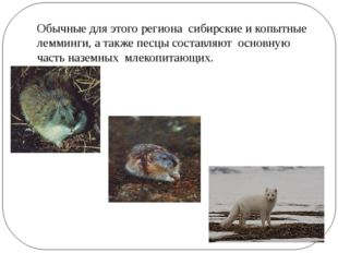 Обычные для этого региона сибирские и копытные лемминги, а также песцы состав
