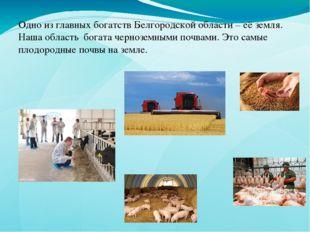 Одно из главных богатств Белгородской области – её земля. Наша область богата