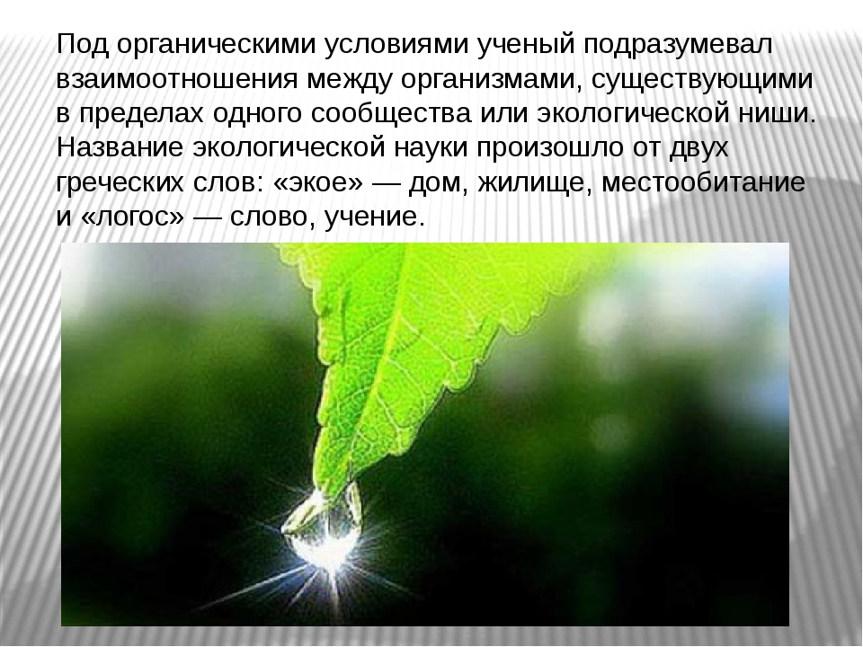 Под органическими условиями ученый подразумевал взаимоотношения между организ...