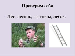 Проверим себя Лес, лесник, лестница, лесок.