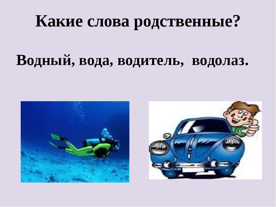 Какие слова родственные? Водный, вода, водитель, водолаз.
