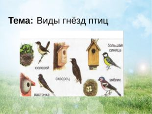 Тема: Виды гнёзд птиц