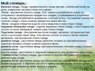 Мой словарь: Висячее гнездо- гнездо, прикрепленное к опоре (веткам, стеблям р