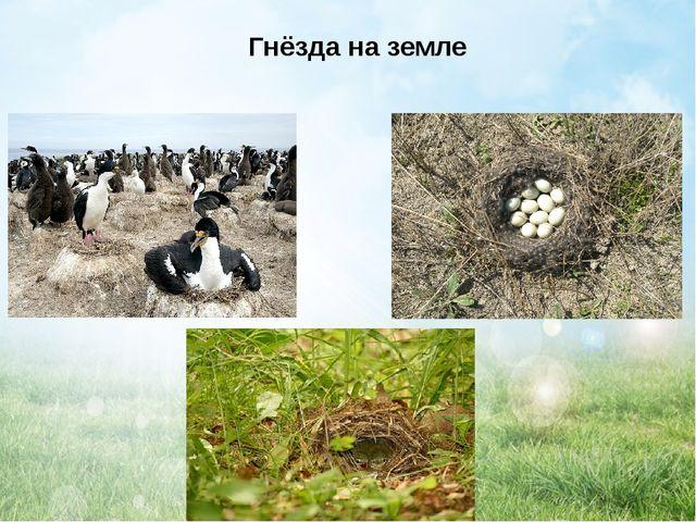 Гнёзда на земле