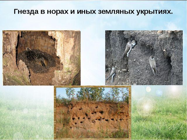 Гнезда в норах и иных земляных укрытиях.