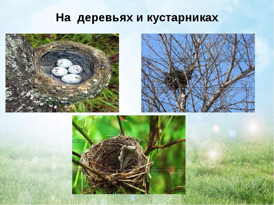 На деревьях и кустарниках