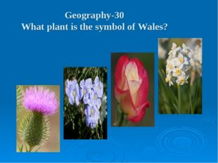 Geography-30 What plant is the symbol of Wales?