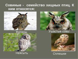 Совиные - семейство хищных птиц. К ним относятся: Филины Ушастые совы Неясыть