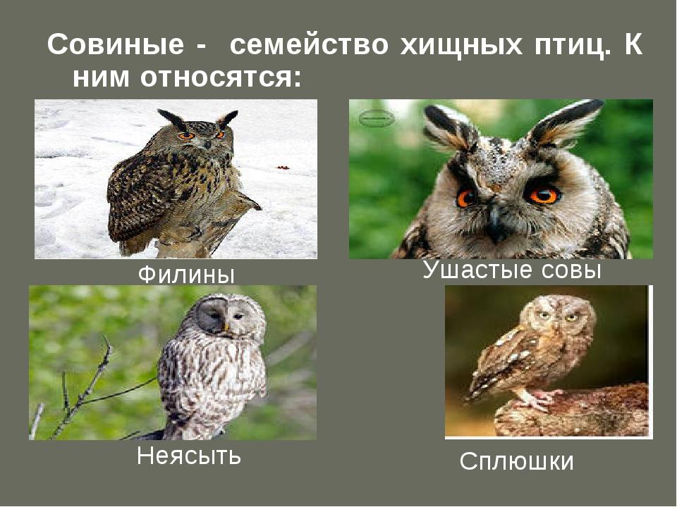 Совиные - семейство хищных птиц. К ним относятся: Филины Ушастые совы Неясыть...
