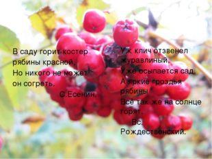 В саду горит костер рябины красной, Но никого не может он согреть. С.Есенин.