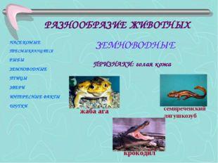 ПРИЗНАКИ: голая кожа жаба ага крокодил семиреченский лягушкозуб НАСЕКОМЫЕ ПРЕ