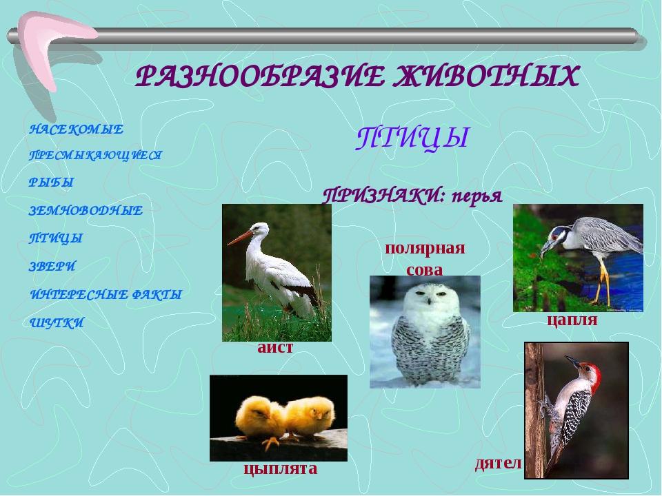 ПРИЗНАКИ: перья аист полярная сова цыплята дятел цапля НАСЕКОМЫЕ ПРЕСМЫКАЮЩИЕ...