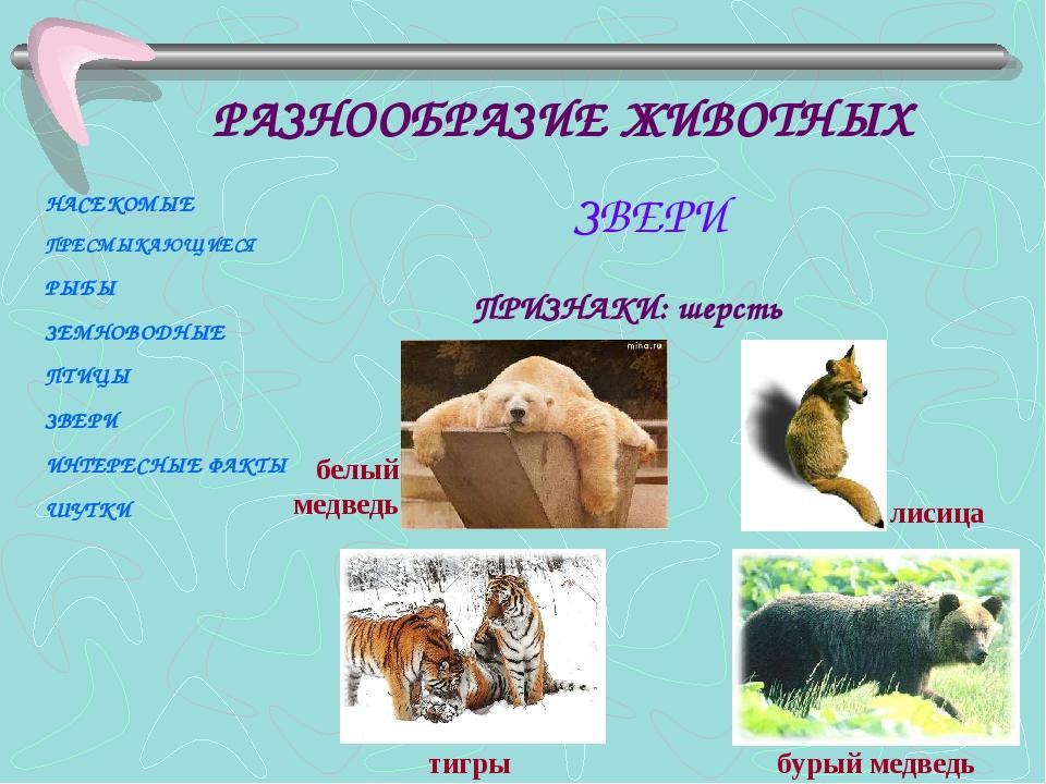 ПРИЗНАКИ: шерсть тигры бурый медведь лисица белый медведь НАСЕКОМЫЕ ПРЕСМЫКАЮ...