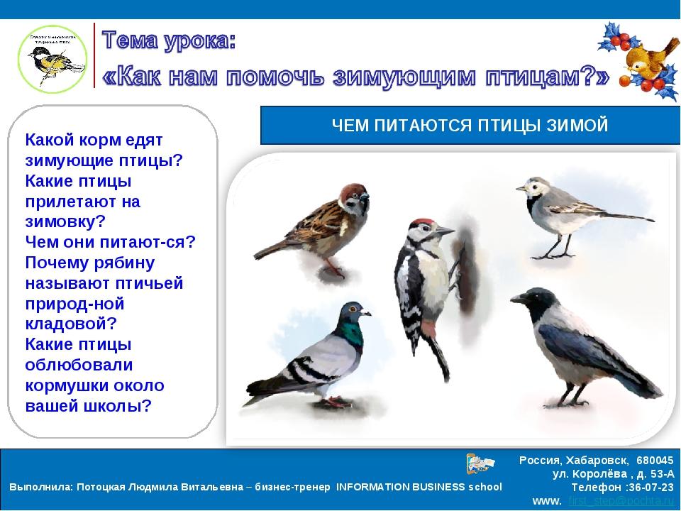 какие птицы прилетают зимой к кормушкам фото которая сосет
