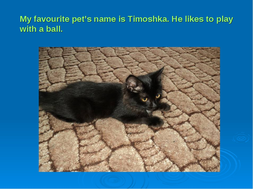My favourite pet's name is Timoshka. He likes to play with a ball.