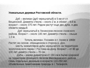 Уникальные деревья Ростовской области. Дуб – великан (дуб черешчатый) в 5 км