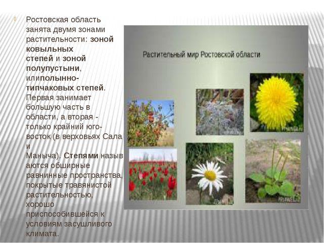 Ростовская область занята двумя зонами растительности:зоной ковыльных степе...