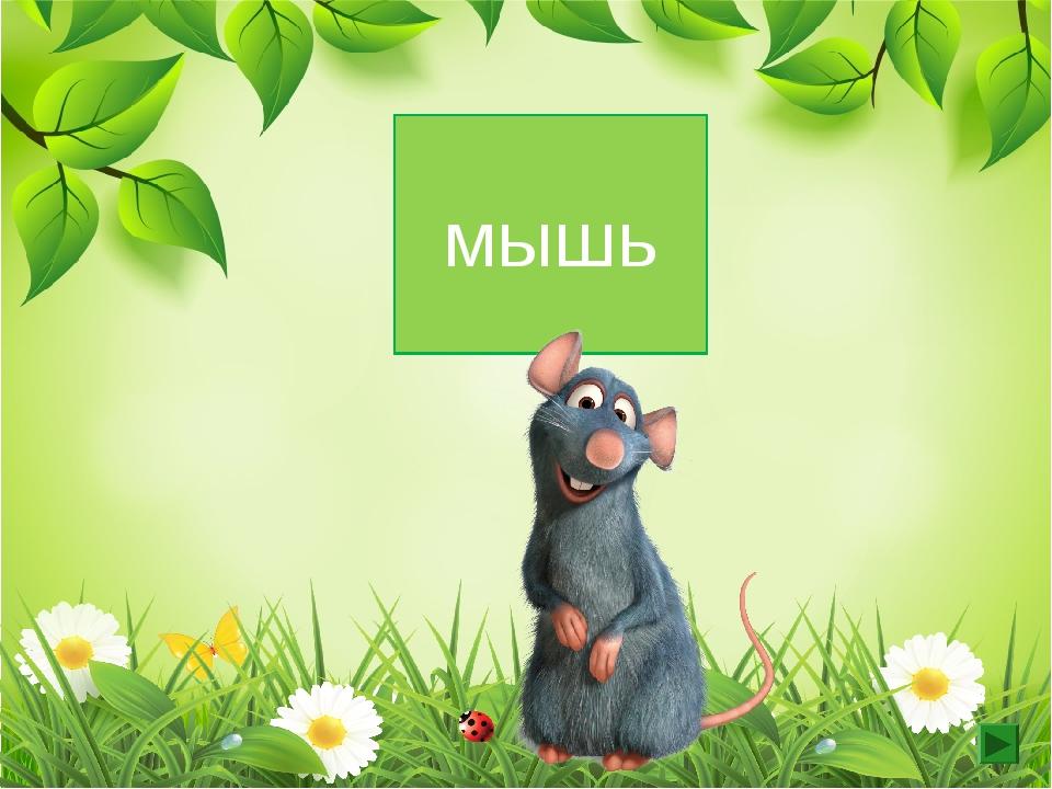 3 скл. ж.р мышь
