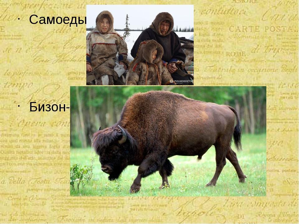 Самоеды- Бизон-
