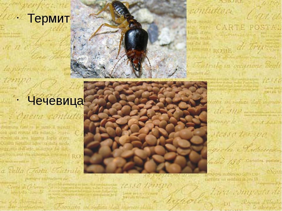 Термит- Чечевица-