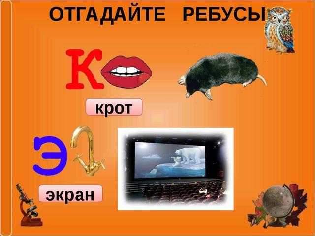 ОТГАДАЙТЕ РЕБУСЫ крот экран
